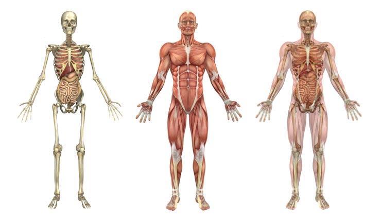 एक ही समय पर पेशाब करना और खून देना असंभव, जानें मानव शरीर से जुड़े अन्य रोचक तथ्य