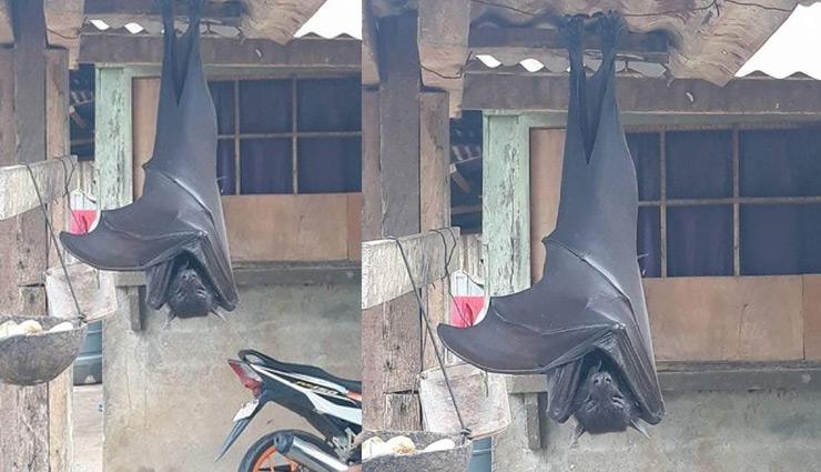 इस देश में दिखाई दिए इंसान के आकार के चमगादड़, लोगों में खौफ