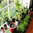 Know The Right Direction To Keep Plants in House For Growth and Prosperity Astrology Articles in Hindi