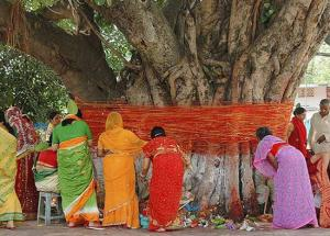 Banyan Tree Rituals To Perform To Bring Prosperity