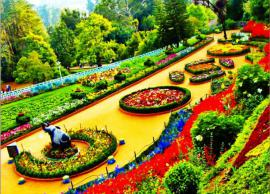 5 Most Beautiful Botanical Gardens To Visit in India