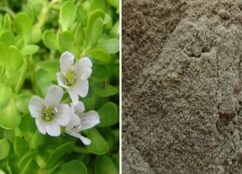 7 Benefits of Using Brahmi Powder For Hair