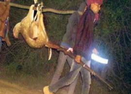 VIDEO- Poachers carry Ranthambore chital deer, picture goes viral