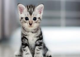 न्यूजीलैंड में बिल्लियों को किया जा रहा है बैन, वजह चौकाने वाली