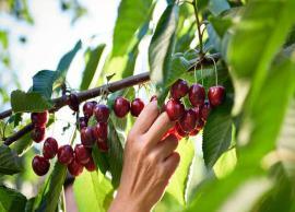 4 Amazing Beauty Benefits of Cherry