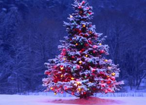 Do You Know The History and Importance of Christmas Tree?