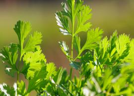 7 Beauty Benefits of Cilantro For Skin