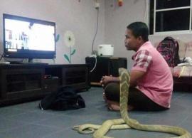 कोबरा को पत्नी की तरह अपने साथ रखता है ये शख्स, दोनों एक साथ बेठ कर देखते है टीवी, देखे तस्वीरे-Photo Gallery
