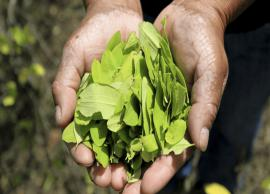 5 Most Amazing Health Benefits of Coca Leaves