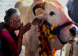 Importance of Cow Worship in Hindus