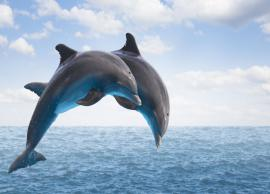 14 Destinations in India To Enjoy Spotting Dolphins