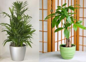 These Plants Will Bring Good Luck in Your Life. No, They are Not Tulsi or Bamboo