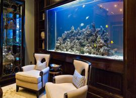 Vastu Tips For Place Fish Aquarium in House