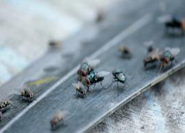 8 Home Remedies To Keep Flies Away From House