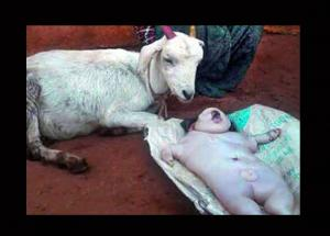 STRANGE!! A Goat Gave Birth To a Human Baby