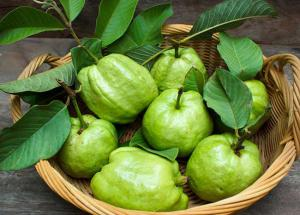 5 Guava Leaves Face pack For Multiple Skin Benefits