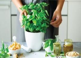 9 Herbs You Can Grow Indoors
