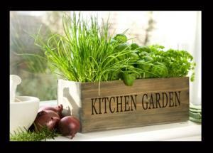 5 Herbs That You Must Have in Your Kitchen