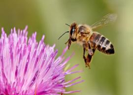 5 Effective Ways To Get Rid of Honey Bees From Home