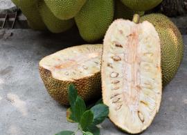 6 Major Health Benefits of Jackfruit