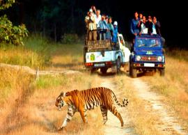 Planning a Visit to Jim Corbett National Park? Don't forget to check this list