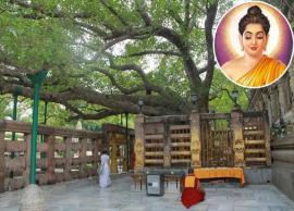 5 Interesting Facts About Mystic Mahabodhi Temple Where Lord Buddha Attained Enlightenment