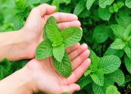 Health Tip -  Know How can be Mint Useful for Us