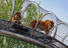 6 Must Visit Zoo in The World