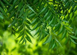 8 Amazing Benefits of Neem Leaves for Skin and Hair