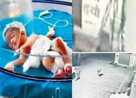 हरियाणा : कुत्ते ने बचाई बच्ची की जान, महिला जन्म के कुछ घंटे बाद फेंक गई थी नाले में