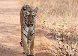 5 State in India With NO Tiger Presence Anymore