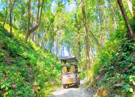 Visit This Hidden Gem of Uttarakhand For Perfect Safari Experience