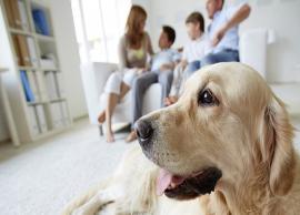 5 Effective Ways To Treat Pet Allergy