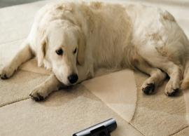Tips To Remove Pet Hair From Your House