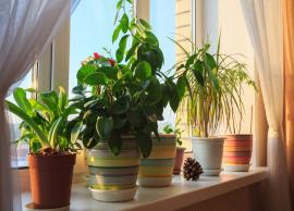 5 Ways To Make Your Home Plants Friendly-Photo Gallery