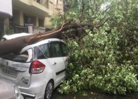 Rainstorms Hit Delhi and Noida, Leading To Trees Uprooted and Vehicles Damage
