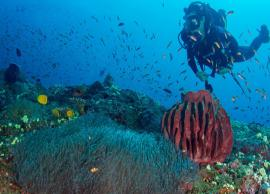 5 Places To Experience Scuba Diving in India