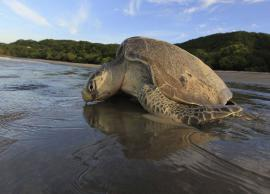 5 Places To Spot Sea Turtles in India