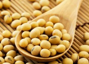 Soybeans Keeps Your Digestion Proper. Read More Benefits