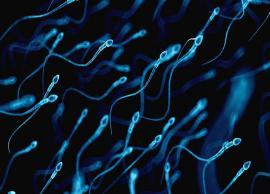 5 Unbelievable Benefits of Sperms