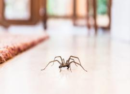 Tips To Get Rid of Spiders From Home