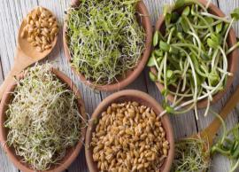 4 Types of Sprouts To Help You Stay Fit