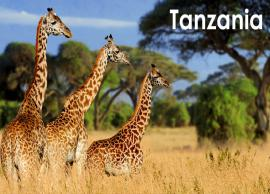 10 Must Visit Attractions in Tanzania