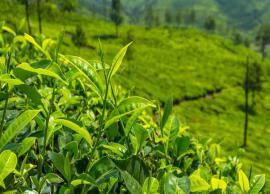 5 Most Famous Tea Estates in India