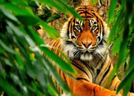 4 Wildlife Safaris That You Need Visit in Madhya Pradesh