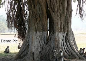 Tree That Gets You Married in 90 Days