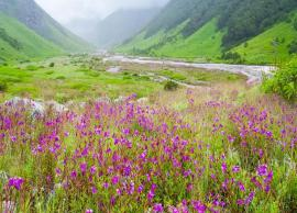 5 Places in India To Witness The Beautiful Valley of Flowers