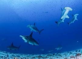 5 Wild Water Marine Life Sanctuaries To Visit in India