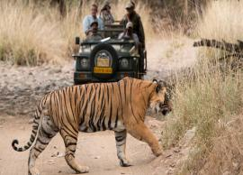 6 Wildlife Reserves To Visit in India
