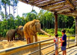 5 Best Zoo To Explore in India